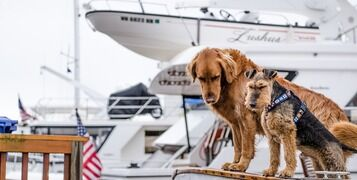 Sailing With Dogs: 6 Safety Tips